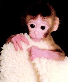 clone monkey 2