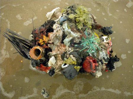 Maarten Vanden Eynde Coral Reef
