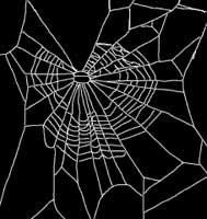 spider marijuana