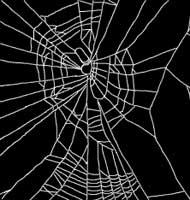 spider speed